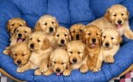 宠物狗图片(40张)
