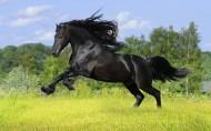 美丽的骏马图片(18张)