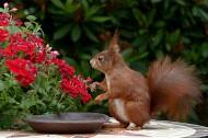 可爱的小松鼠图片(10张)