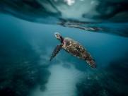 遨游的海龟图片(11张)