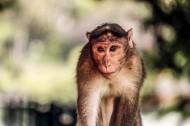 呆萌的猴子图片(12张)