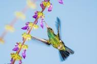 飞鸟采蜜吃食图片(15张)
