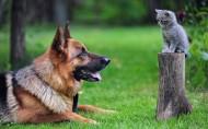 德国黑背牧羊犬图片(22张)