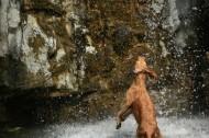 戏水的狗狗图片(6张)