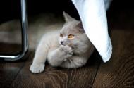侧卧的猫咪图片(10张)