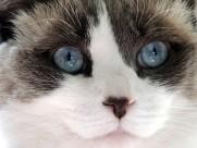 猫咪的头部特写图片(23张)