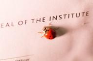 一只七星瓢虫图片(11张)