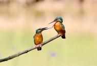 翠鸟图片(9张)