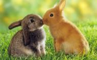 可爱兔子图片(6张)