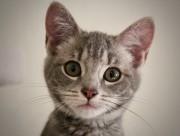 睁着大眼睛的可爱小猫图片(10张)