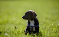 玩耍的小狗图片(16张)