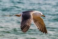 海鸥图片(10张)