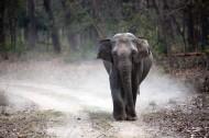 一头行走的大象图片(9张)