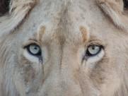 神奇的动物眼睛图片(12张)