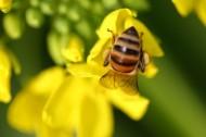 勤劳的小蜜蜂图片(6张)