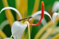 花丛里的螳螂图片(9张)