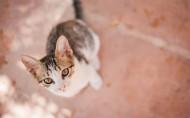 可爱宠物喵咪图片(15张)