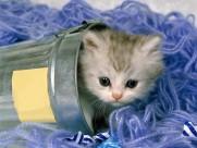 可爱猫咪图片(31张)