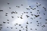 天空上无数的飞鸟图片(10张)