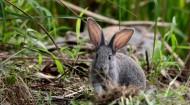 可爱的灰兔子图片(9张)