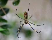彩色蜘蛛图片(13张)