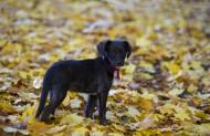 玩耍的狗狗 图片(14张)