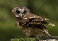 猫头鹰图片(15张)