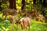 野生鹿图片(8张)