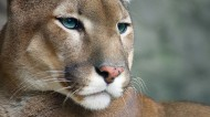 凶猛的老虎图片(28张)