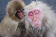 可爱猴子图片(13张)