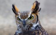 机灵可爱的猫头鹰图片(14张)