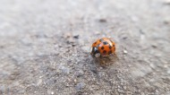 外观漂亮的甲虫图片(14张)