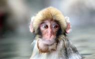 猴子图片(9张)