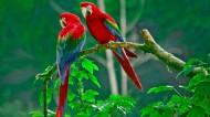 可爱鹦鹉图片(6张)