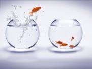 鱼缸中的金鱼图片(13张)