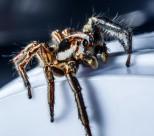 一只蜘蛛高清图片(11张)