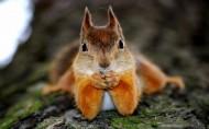 可爱的松鼠图片(20张)