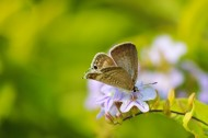 停留在花上的蝴蝶图片(15张)