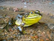 形态各异的青蛙图片(13张)