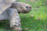 乌龟图片(10张)