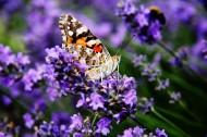 各种漂亮的蝴蝶图片(10张)
