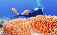 海底美丽珊瑚图片(11张)