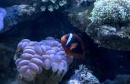 海底珊瑚图片(6张)