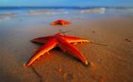 棘皮动物海星图片(15张)