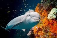 多种多样的海洋动物图片(15张)