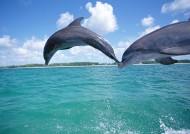 海豚图片(31张)