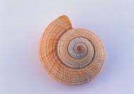 贝壳图片(100张)