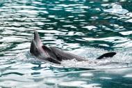 可爱的海豚图片(10张)
