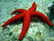 好看的海星图片(15张)