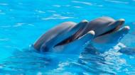 活泼可爱的海豚图片(7张)
